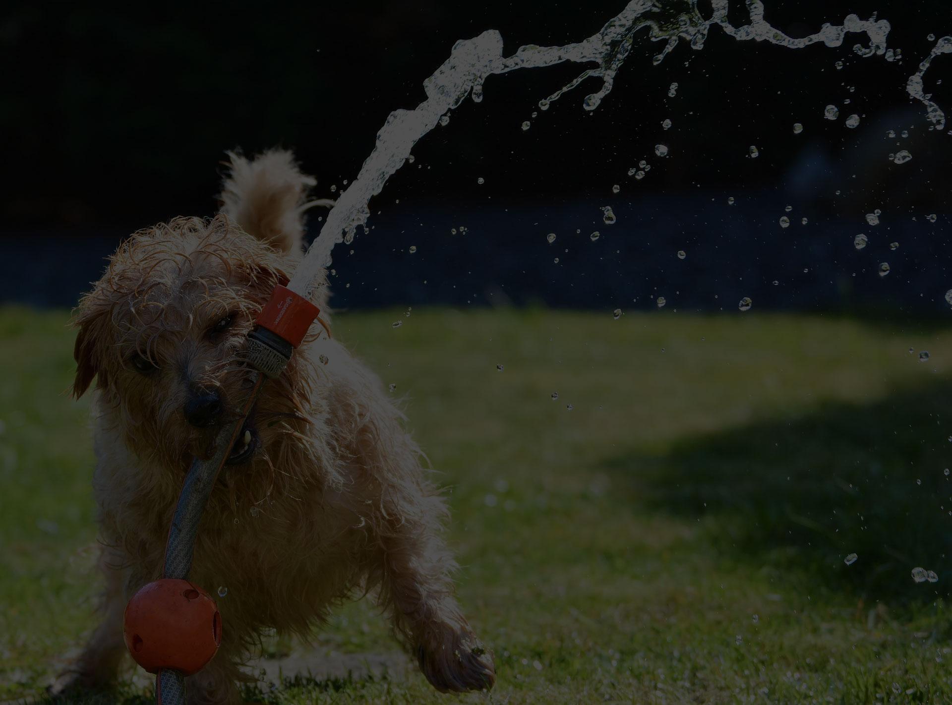 dog-garden-terrier-fun