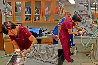 Vet performing dental procedure
