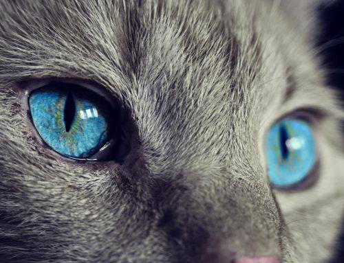 Periodontal Disease – Protecting your pet
