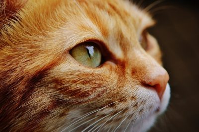 cat-face-close-up-view-eyes