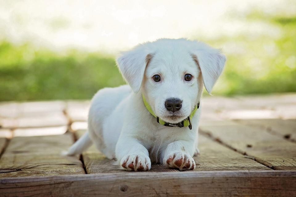portrait-of-a-dog