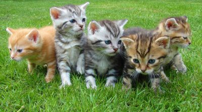 kitten-cat-rush-lucky-cat