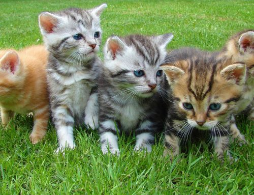Caring for a New Kitten – The Guide