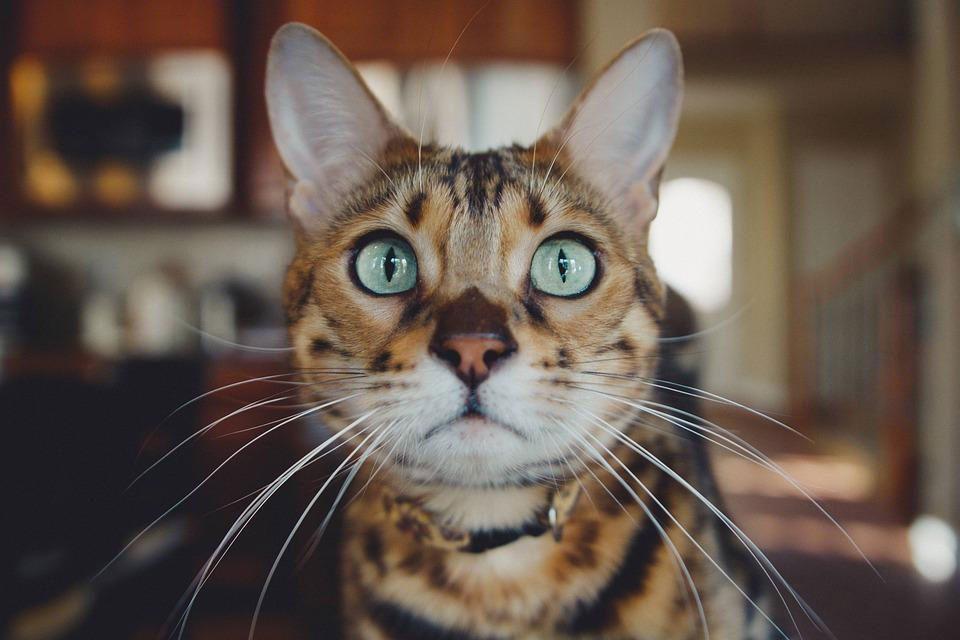 cat with green eyes looking at camera