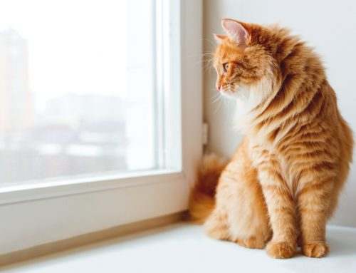 6 Ways to Keep Your Indoor Cat Healthy and Happy