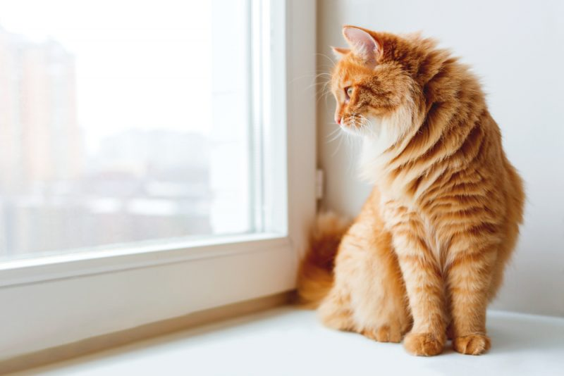 Cute ginger cat siting on window sill and waiting for something