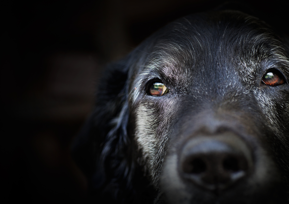5 common health conditions in senior dogs - Vet In Austin