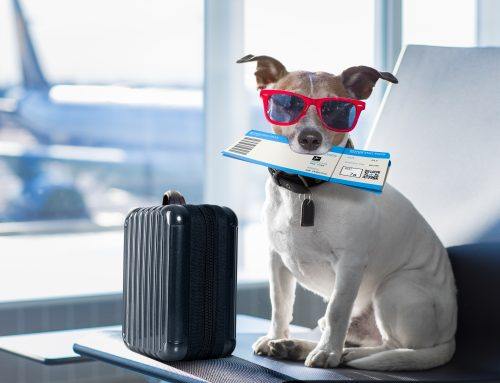 Planes, Trains, and Automobiles: Safe Holiday Travels with Your Pet