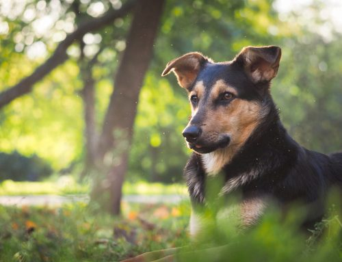 Don't be a Victim: 10 Misconceptions About Heartworm Disease