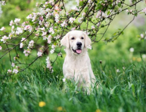 5 Sneaky Signs Your Pet May Have Allergies, and How You Can Help