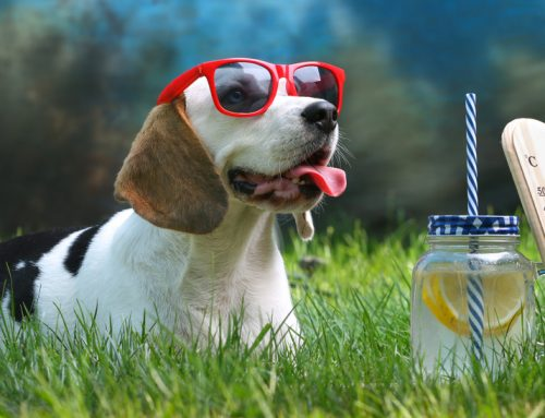 7 Tips to Help Your Pet Beat the Heat this Summer