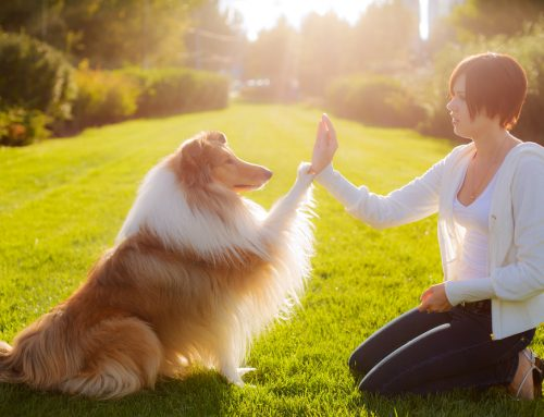 Back to School: Canine Training Basics