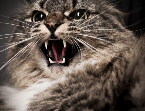 Freaked Out Feline? How Your Cat's Environment Influences Behavior