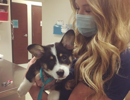 Behind-the-Scenes VIP Access at Southwest Vet: Meet the Rockstars