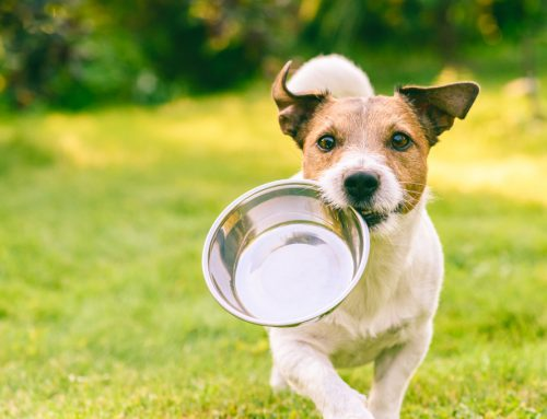 Feeding Your Pet for Optimal Health