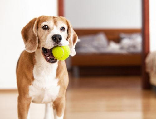 Safe or Unsafe? How to Choose Chew Toys for Your Pet
