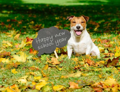 4 Back to School Concerns for Your Pet